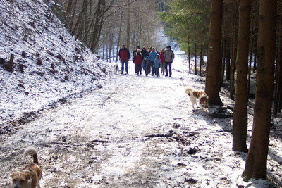 Kromfohrländer Bergische Wanderung