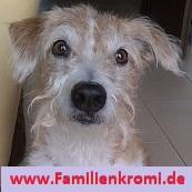 Familienkromi Kromfohrländer Homepage